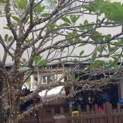 國碩電子遊戲場 聖誕節活動 樹裝飾小彩燈 網燈 流星燈 出租施工搭設 (3)