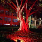 斯里蘭卡 中興大學草地廣場 新年慶典餐會 場地佈置 全彩投射燈 出租運送 (12)